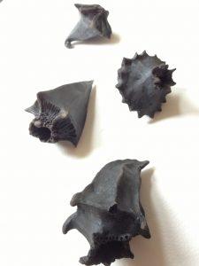 svarta keramiksnäckor